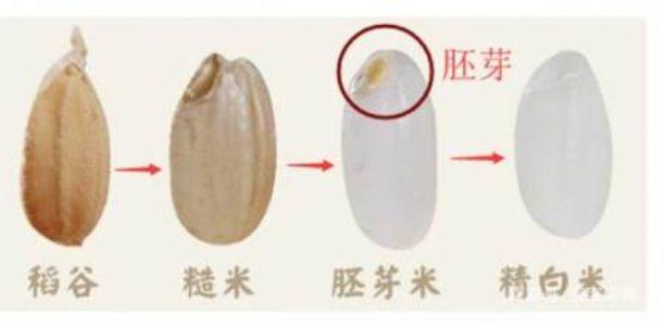 宝宝辅食吃胚芽米好不好?怎样给婴儿食用胚芽米?