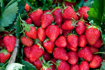 草莓农药残留,坐月子最好不要吃
